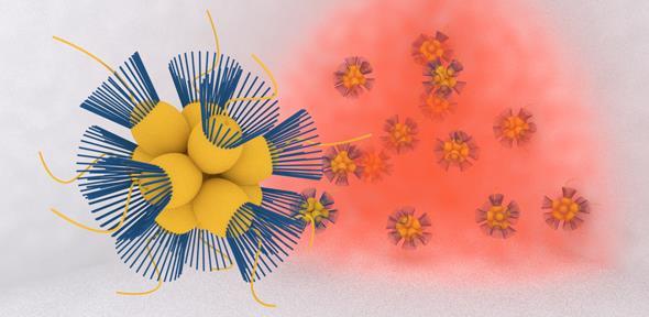 Sinh vật nhỏ bé tạo oxy cần thiết cho con người