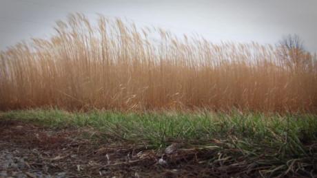 Cây trồng giảm lượng khí thải nhà kính